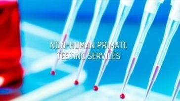 Non-Human Primate (NHP) Testing Services