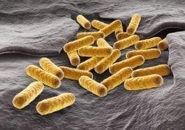 E. coli bacteria - Protecting the food supply