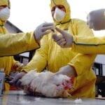 Pathogenic Avian Influenza