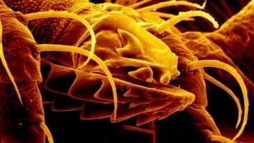 Tick-borne pathogens