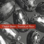 Ricin Comes From Castor Beans