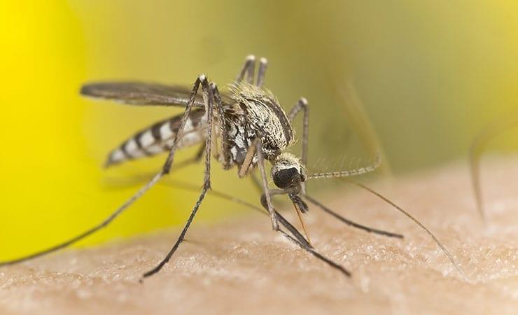 Army Public Health Tracking Chikungunya Virus