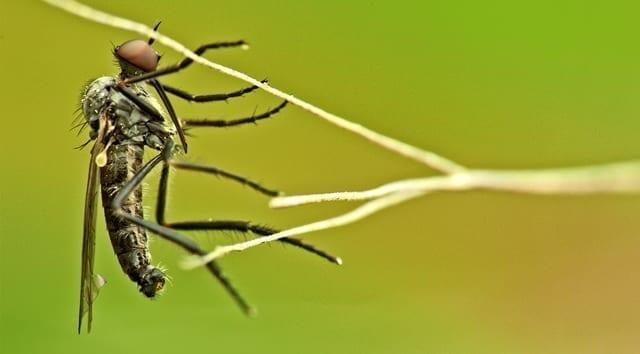 Dengue Fever in Europe