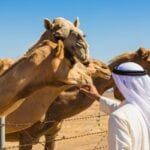 MERS CoV Transmission in Camels