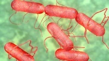 Salmonella Pathogen Detection
