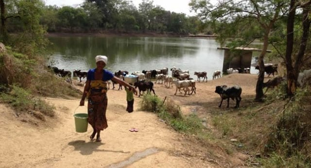 Neglected Tropical Diseases in Africa