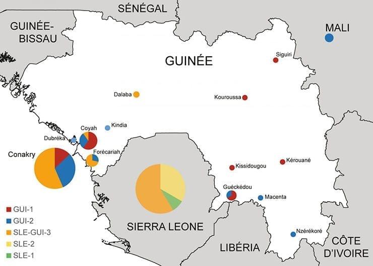 Ebola Virus Mutations in Guinea