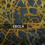 Ebola Virus POC Diagnostics