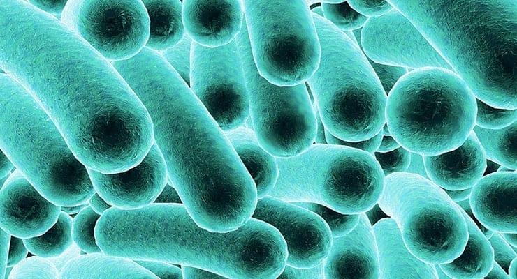 salmonella abstract essay Salmonella essay - download as word doc (doc / docx), pdf file (pdf), text file (txt) or read online essay describing the pathogen salmonella.
