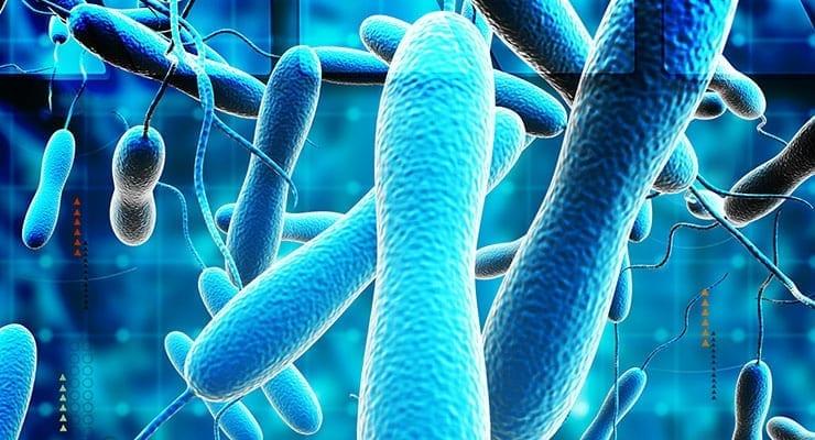 cholera disease research report