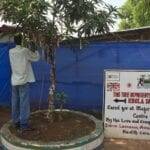 Ebola Survivors Tree in Sierra Leone