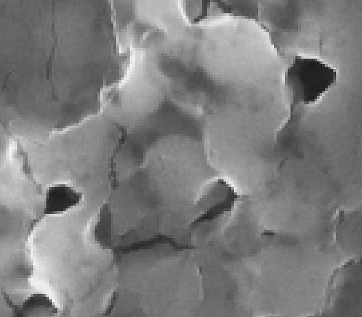 M. Lysodeikticus Bacteria