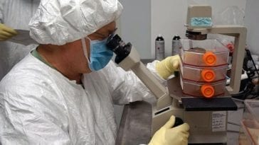 A WRAIR scientist examines vero cells for the Zika virus