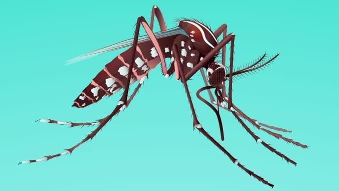 mosquito-cdc-zika