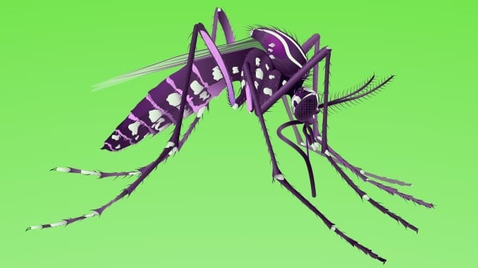 Zika and Mosquito Vector Control