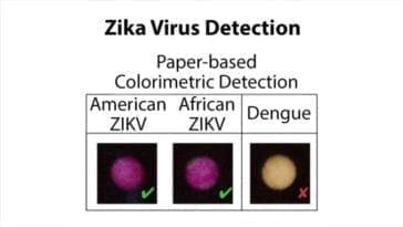Zika Virus Diagnostics via Paper-Based Colorimetric Detection