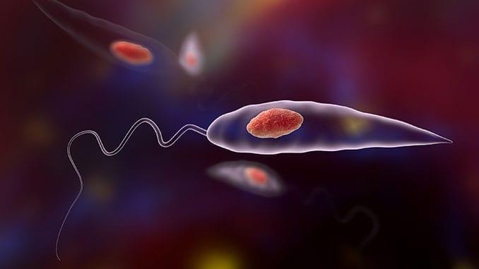 Leishmania Pathogen