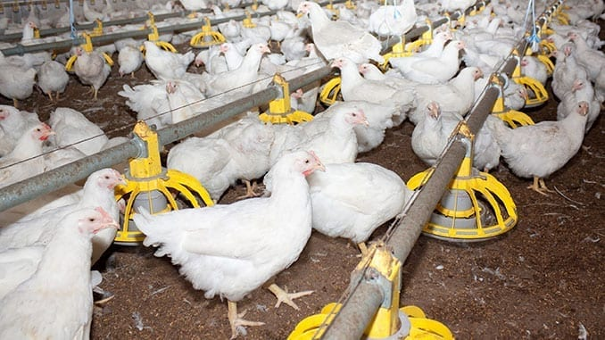 Avian Influenza H5N8