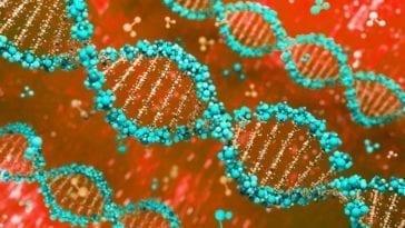 Nucleic Acid Vaccines