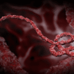 Ebola Virus Host Factor Therapeutic Target