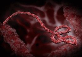 Ebola Virus Host Factor Therapeutic Target