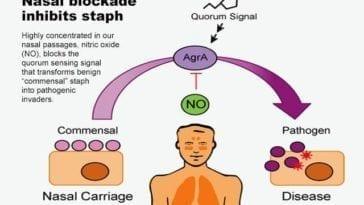 Staph Research on Quorum Sensing