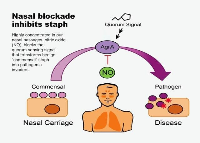Staph Research on Quorum Sensing
