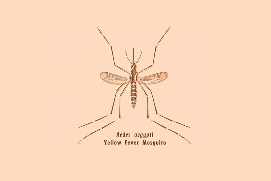 mosquito simple line drawing