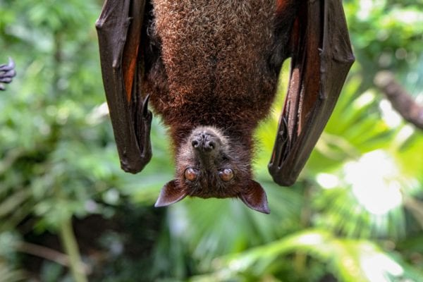 A Close Relative of SARS-Cov-2 Found in Bats Offers More Evidence It Evolved Naturally