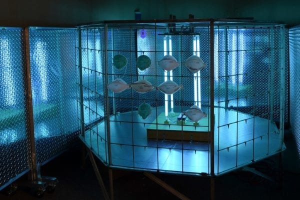 Bug Zapper Uses UV-C Light to Enable Sterilization and Reuse of N95 Masks