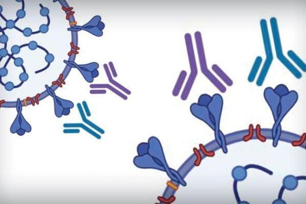 UT Austin Spearheads Scalable, ELISA Antibody Test for SARS-CoV-2